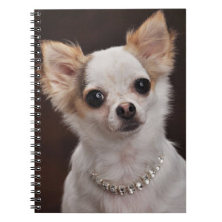 Glamour Chihuahua Diva Note Books