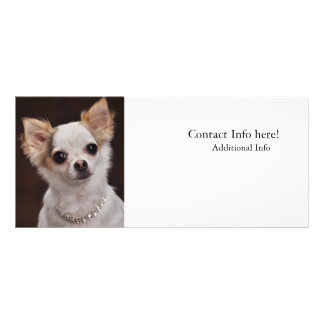 Glamour Chihuahua Diva Custom Rack Cards