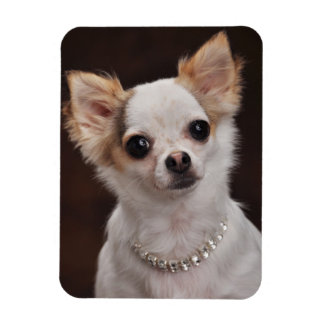 Glamour Chihuahua Diva Rectangular Photo Magnet