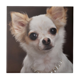 Glamour Chihuahua Diva Ceramic Tiles