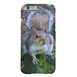Glasgow Squirrel Barely There iPhone 6 Case