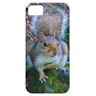 Glasgow Squirrel iPhone SE/5/5s Case