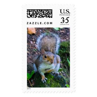 Glasgow Squirrel Postage