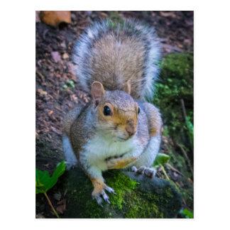 Glasgow Squirrel Postcard