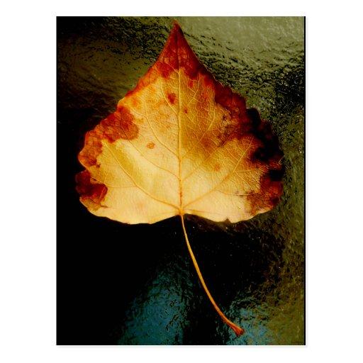 """Glass Leaf"" JTG Art Postcard"