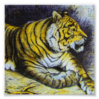 Glass Magic lantern slide A TIGER 1900 BIG CAT Photo Print