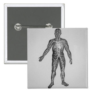 Glass Magic Lantern Slide THE CIRCULATORY SYSTEM Pinback Button