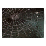 Glass Spider Web Greeting Cards