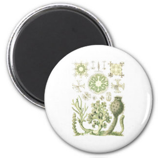 Glass sponges 2 inch round magnet
