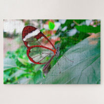 Glass Wing Butterfly. Jigsaw Puzzle
