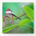 Glass wing butterfly relaxing on fresh green square wallclock
