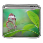 Glass wing butterfly relaxing on fresh green sleeve for iPads