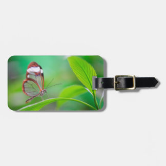 Glass wing butterfly relaxing on fresh green luggage tag