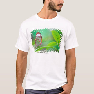 Glass wing butterfly relaxing on fresh green T-Shirt