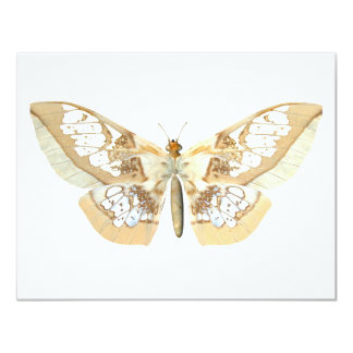 GlassWing Butterfly 4.25x5.5 Paper Invitation Card