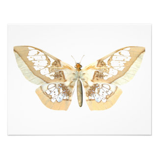 GlassWing Butterfly Personalized Announcements