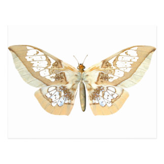 GlassWing Butterfly Postcard