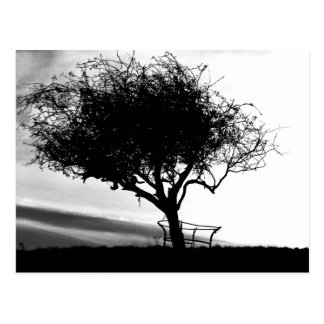 Glastonbury Hawthorn. Tree. Black and White. Postcard