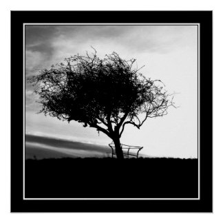 Glastonbury Hawthorn. Tree. Black and White. Poster