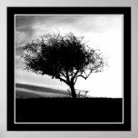 Glastonbury Hawthorn. Tree. Black and White. Print