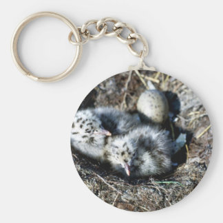 Glaucous-winged Gull Chicks in Nest Keychain