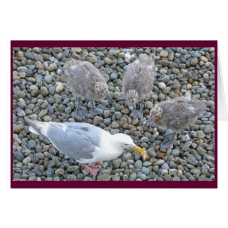 Glaucous-winged Gulls Card