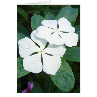 Glebe Reading Garden: Dewdrops on White Card