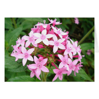Glebe Reading Garden: Pink Bouquet Card