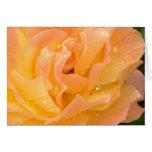 Glebe Reading Garden: Raindrops on Roses Greeting Cards