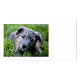 glen of imaal puppy.jpg business card