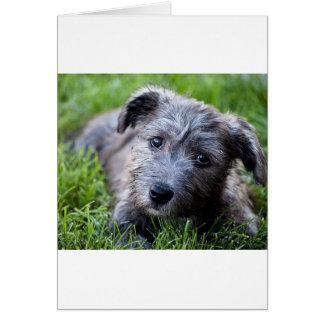 glen of imaal puppy.jpg card