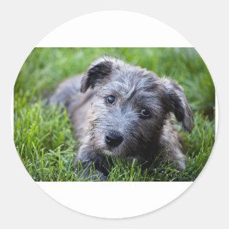 glen of imaal puppy.jpg classic round sticker