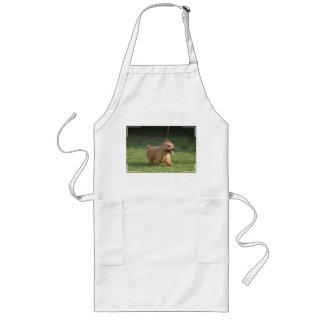 glen-of-imaal-terrier-10.jpg aprons