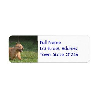 glen-of-imaal-terrier-10.jpg return address labels