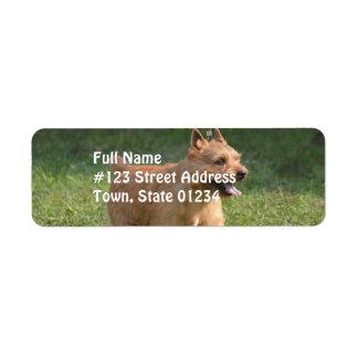 glen-of-imaal-terrier-10.jpg return address label