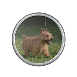 glen-of-imaal-terrier-10.jpg speaker