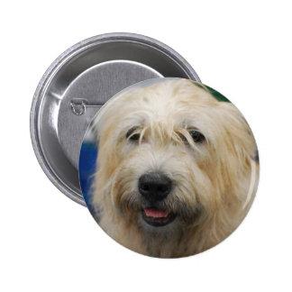 glen-of-imaal-terrier-7.jpg pinback button
