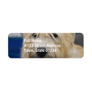 glen-of-imaal-terrier-7.jpg return address labels