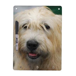 glen-of-imaal-terrier-7.jpg pizarra blanca