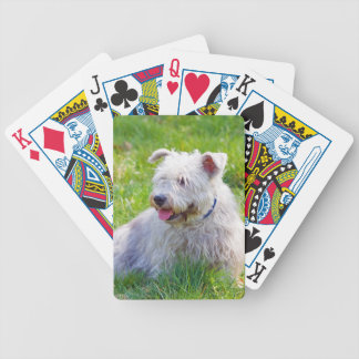 Glen of Imaal Terrier dog cute beautiful photo Bicycle Playing Cards
