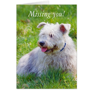 Glen of Imaal Terrier dog missing you card