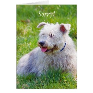 Glen of Imaal Terrier dog sorry greeting card