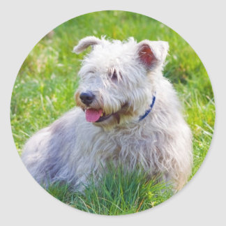 Glen of Imaal Terrier dog sticker, stickers, gift