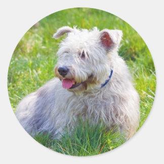 Glen of Imaal Terrier dog sticker, stickers, gift Classic Round Sticker