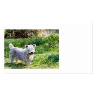 glen of imaal terrier full.png business card