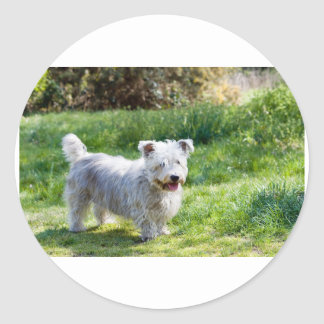 glen of imaal terrier full.png classic round sticker
