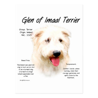 Glen of Imaal Terrier History Design Postcard