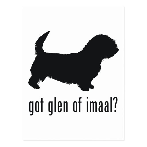 Glen of Imaal Terrier Postcard