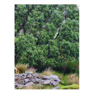 Glengesh Pass In Ireland Landscape Postcard