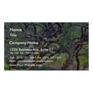 Glengesh Pass In Ireland Old Tree Double-Sided Standard Business Cards (Pack Of 100)